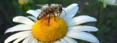 Пасека Борисовского Богородице-Тихвинского женского монастыря дала первый урожай мёда
