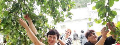Фестиваль «Во-садочку» в Хохлово приурочили к Яблочному Спасу